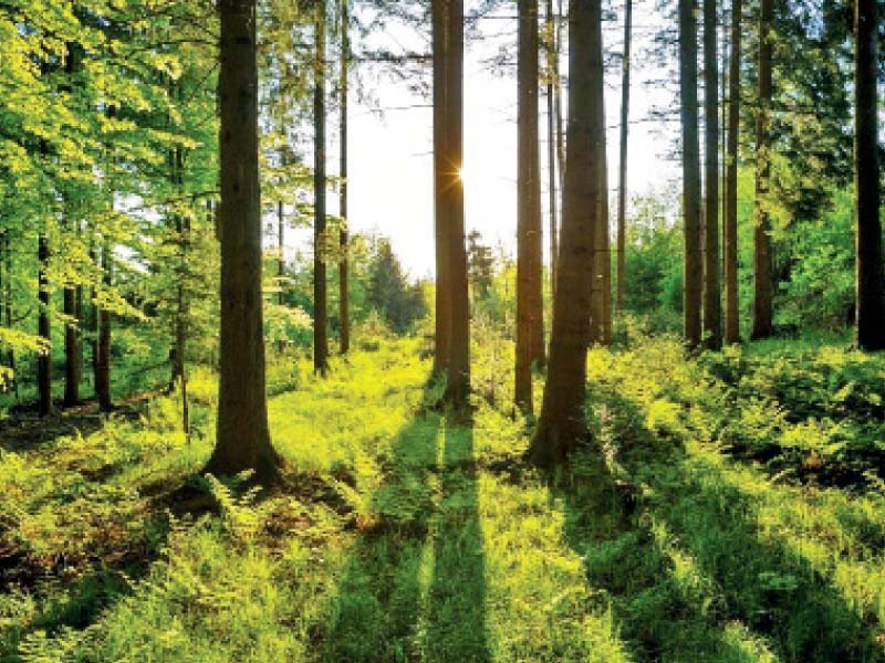 Covid shed light on climate challenges