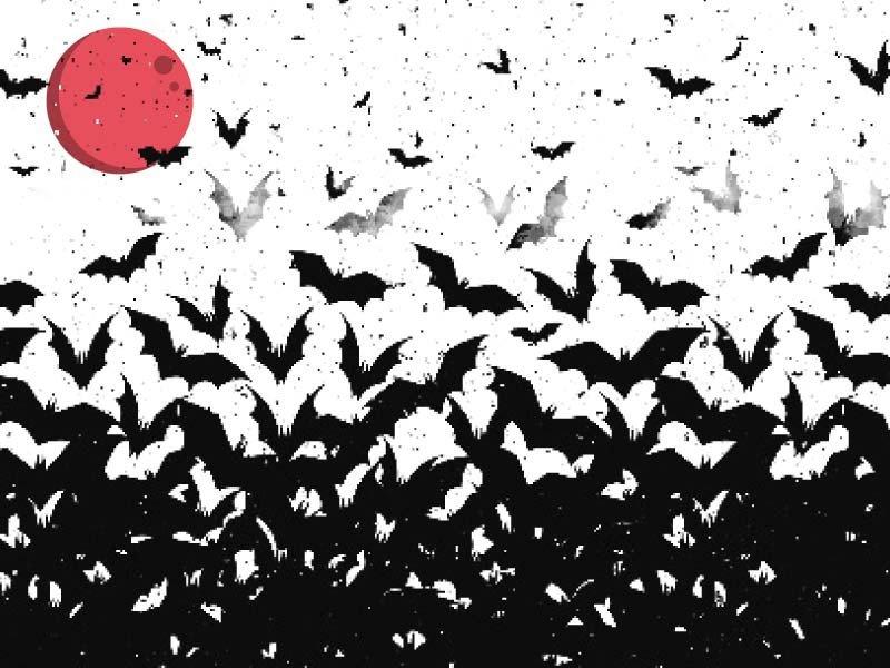 Date with a bat - a nightmare or a dream?