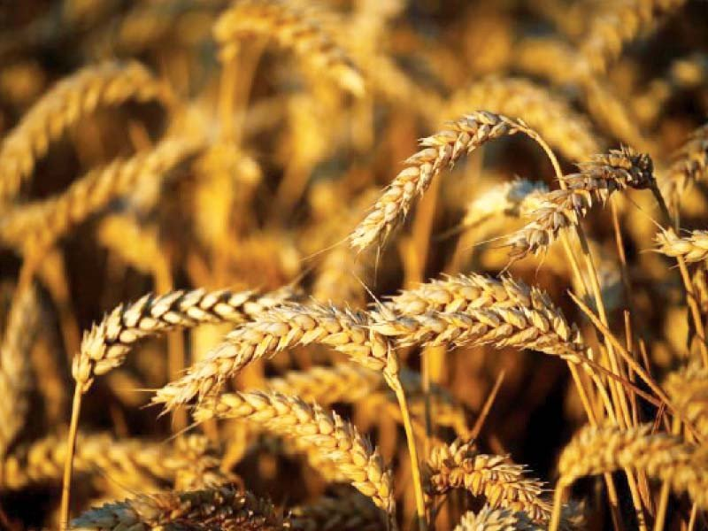 Govt decides to import 4m MT of wheat