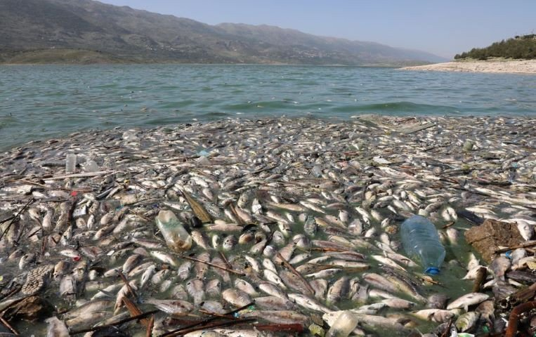 Tonnes of dead fish wash up on shore of polluted Lebanese lake