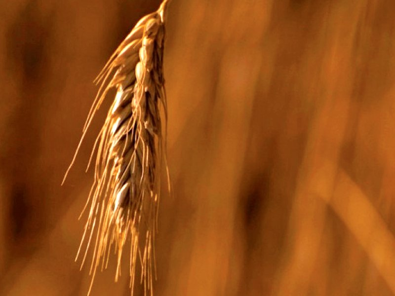 Pakistan has only three weeks of wheat stocks left